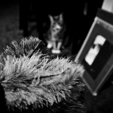 Black and white photo showing a feather duster, and framed photo